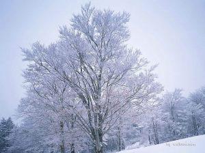 [wallcoo_com]_winter_snow_1EA49175