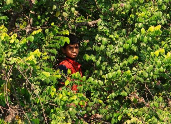 boy-on-tree-323461_1280.jpg